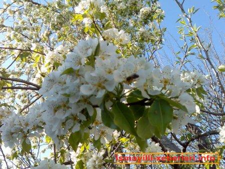 Gəlir Novruz bayramı